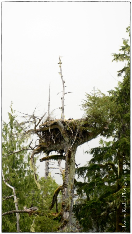 Seriously, now THIS is an Eagle's Nest!