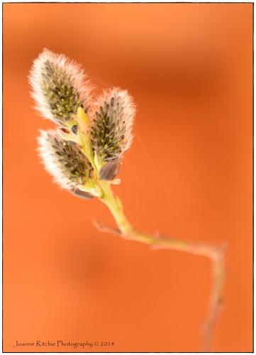 Springtime Webs
