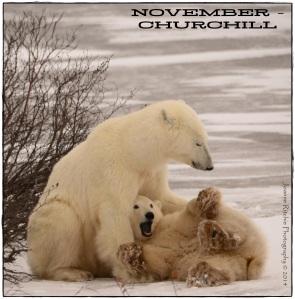 11 - NOVEMBER