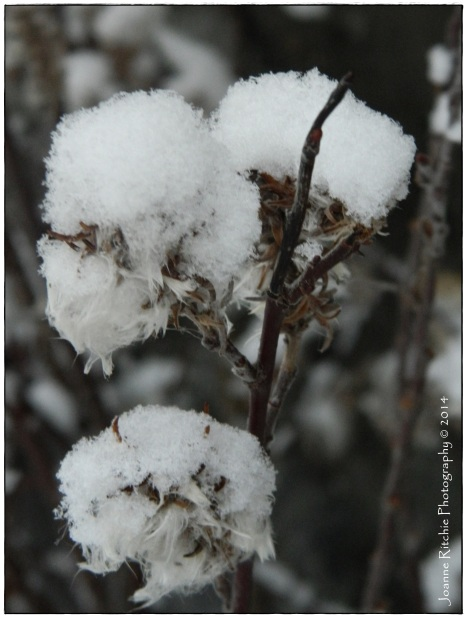 Arctic Snow Topping