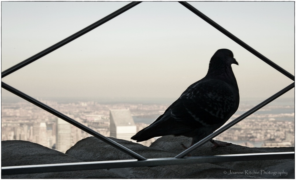 Obligatory Pigeon on Empire State Building