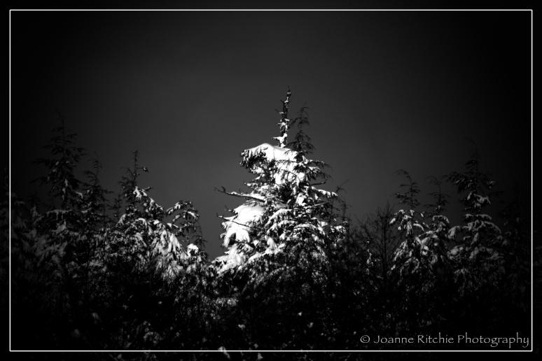 Sunlight on the snow laden trees