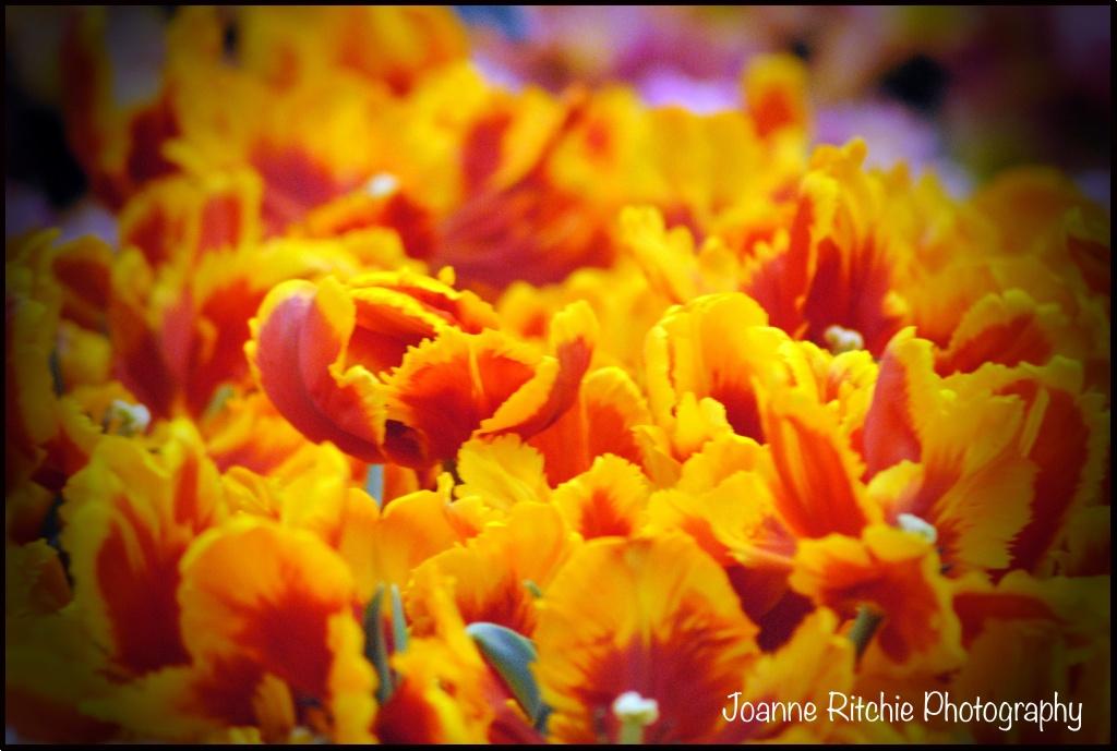 Orange WPC