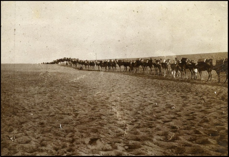 Camel convoy Duran, Palestine.