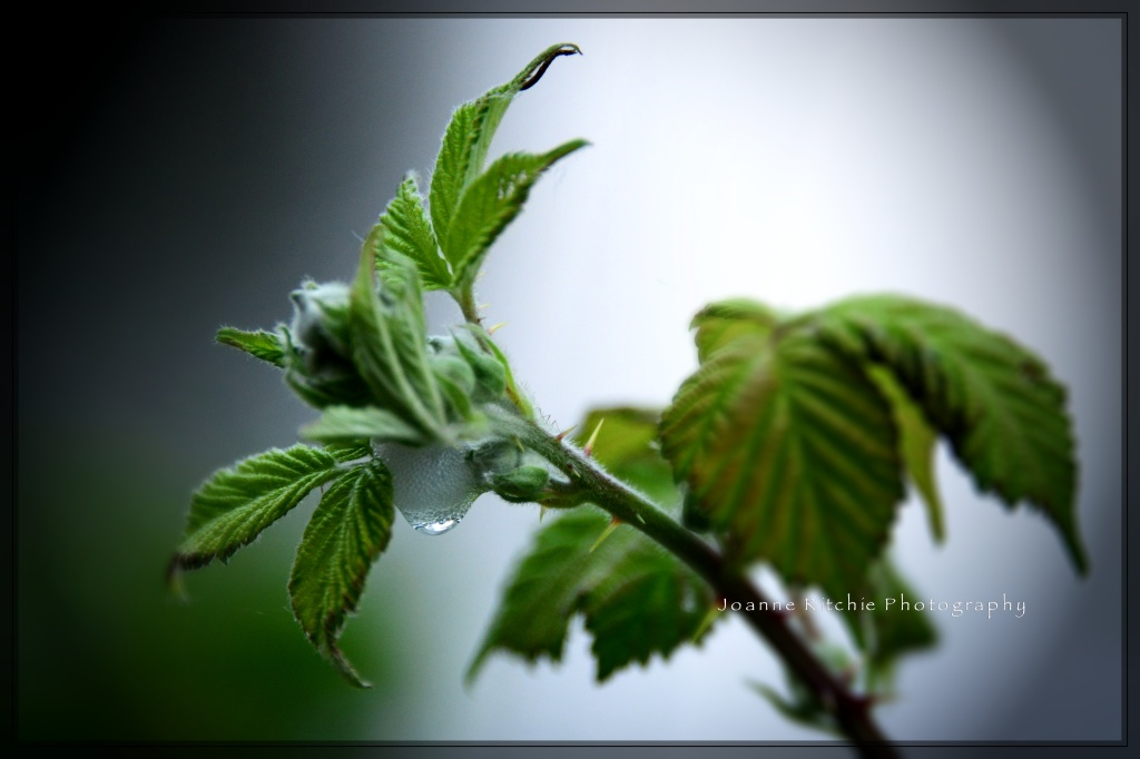 Dew drop if you dare...