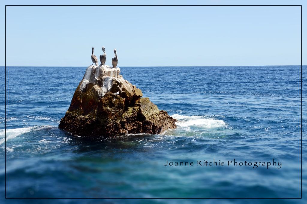 Pelicans of Cabo San Lucas Mexico