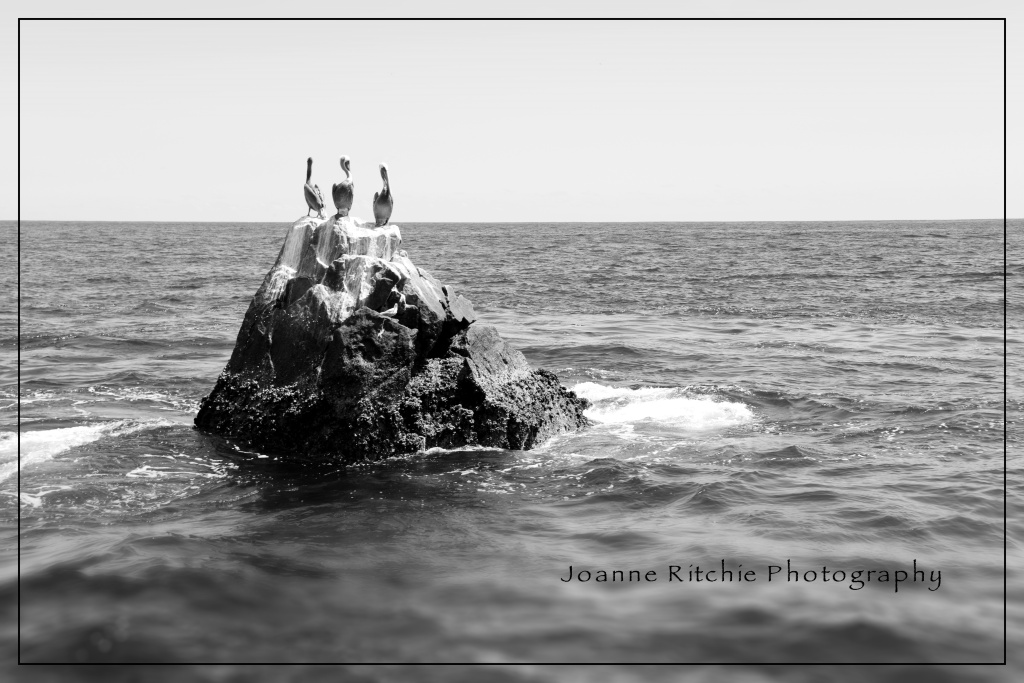 Pelicans of Cabo San Lucas