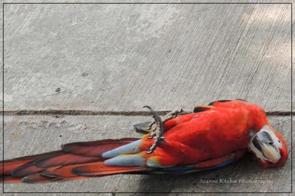 Macaws Off-Season