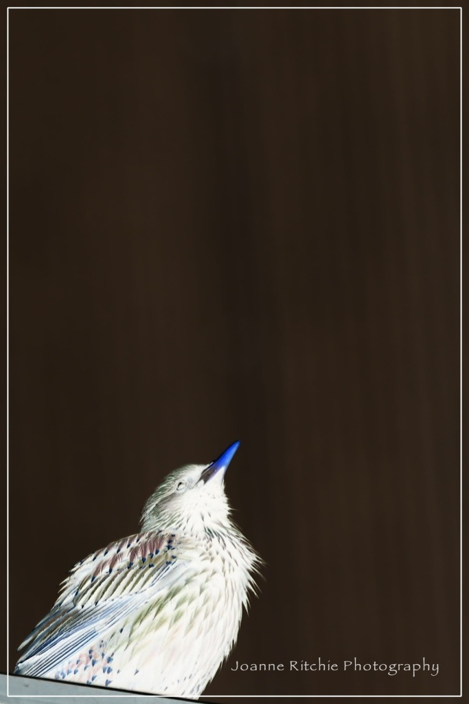 Pretty Bird 1-4-3