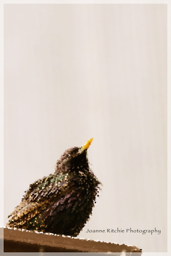 Pretty Bird 1-4-4