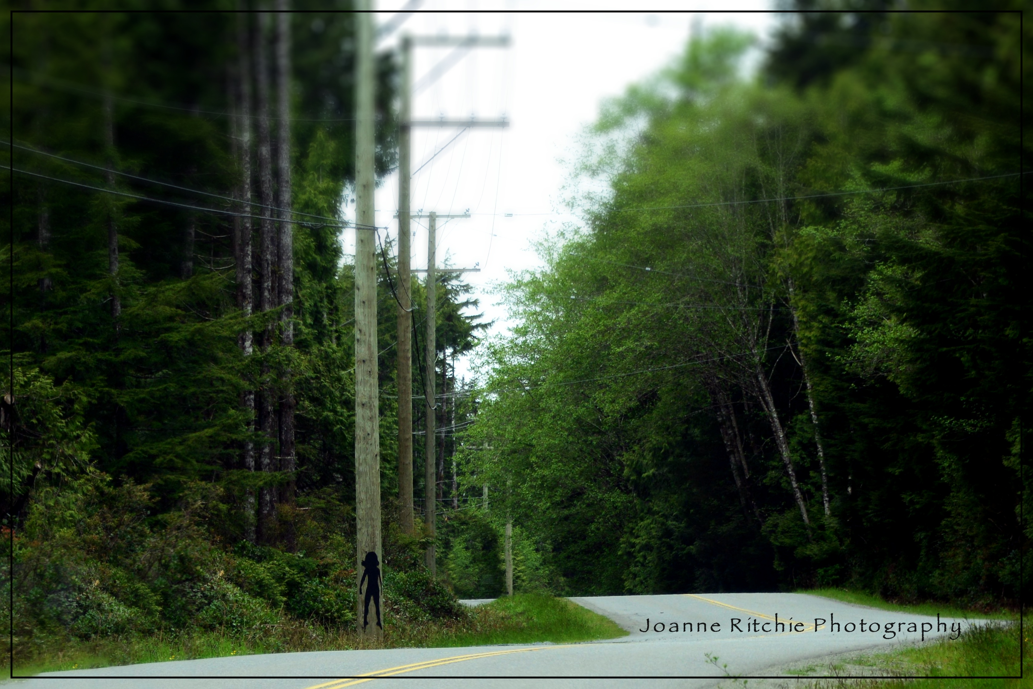 Electrical Poles – Cee's Odd Ball Photo Challenge #22