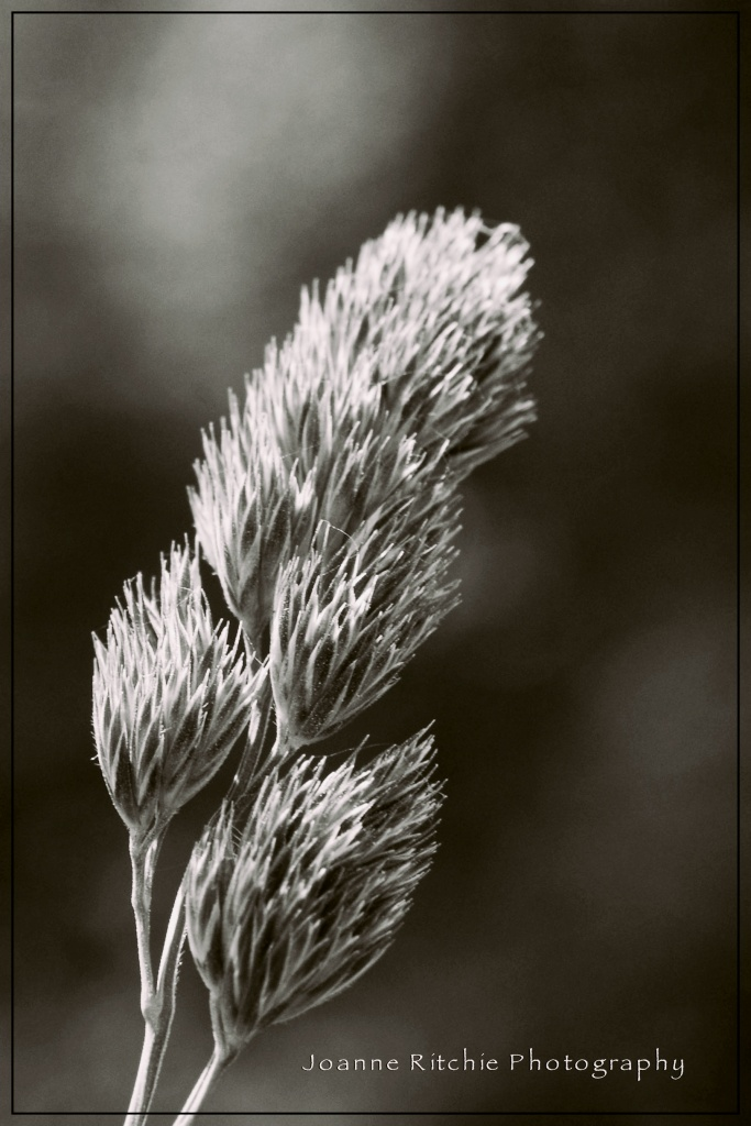 Grass Growing - Monochrome