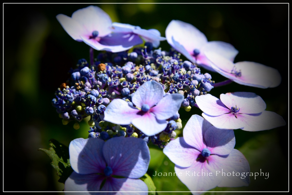A Study in Purple