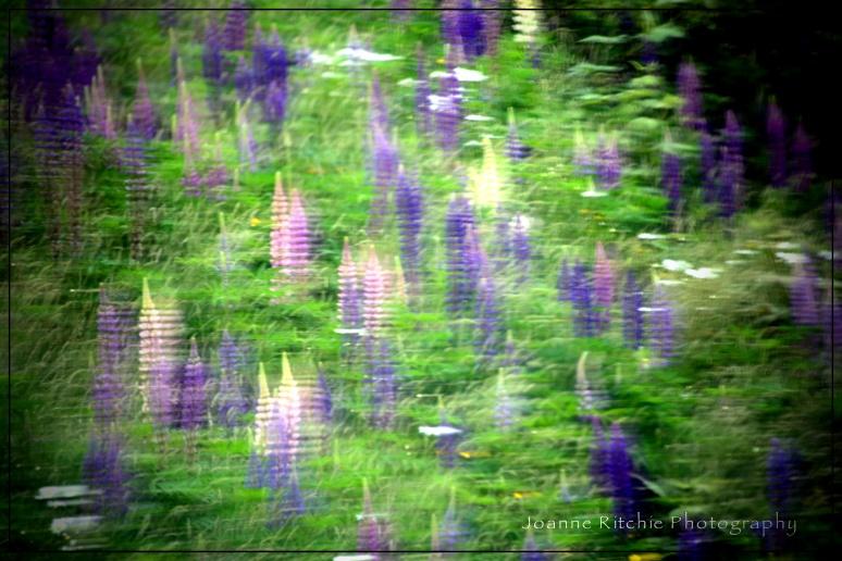 Fields for Monet
