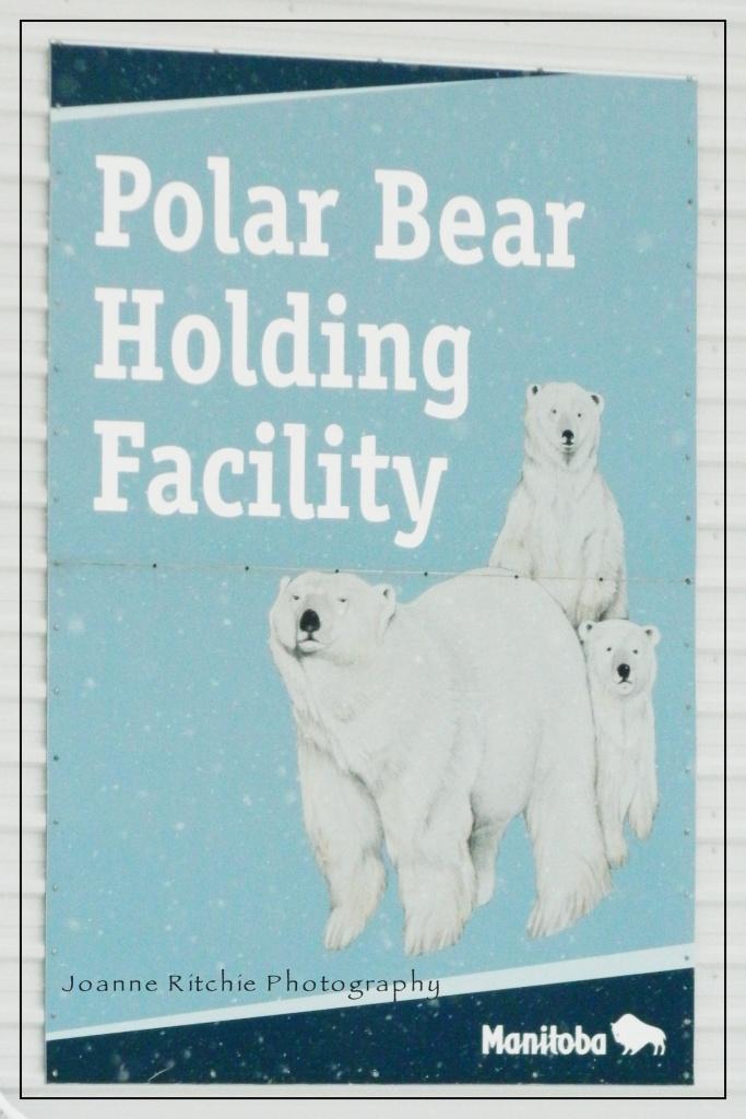 OddBall Polar Bear Holding Facility