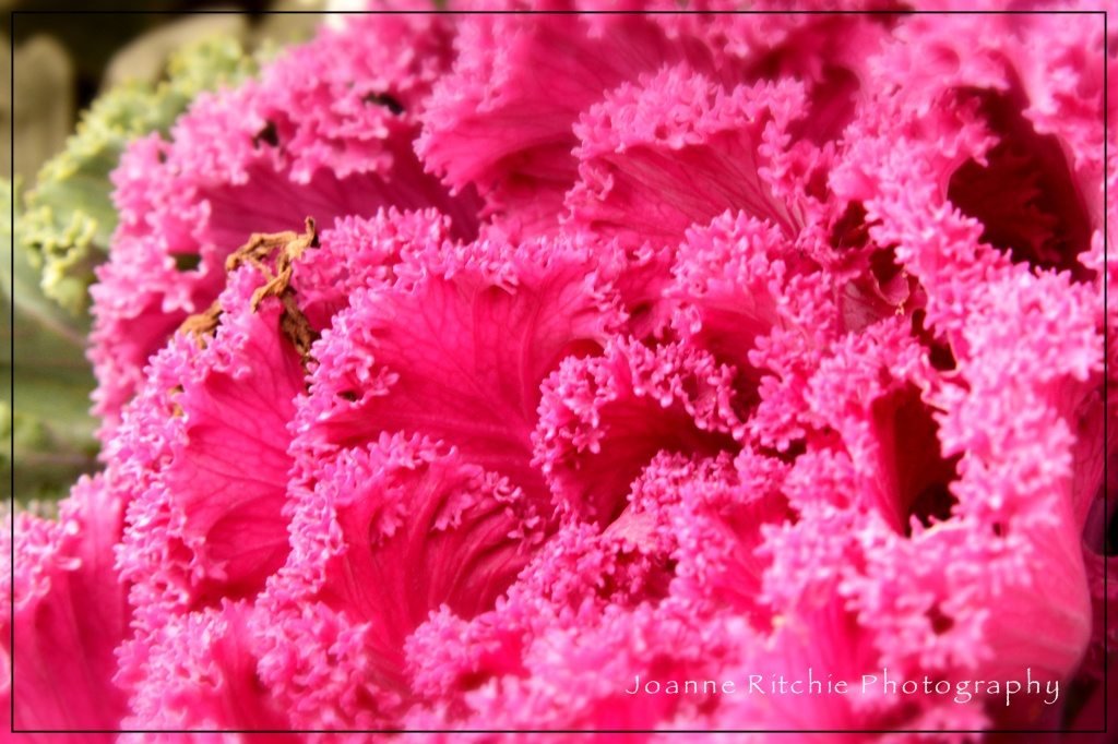 Pink is an Attitude NOT a Colour!
