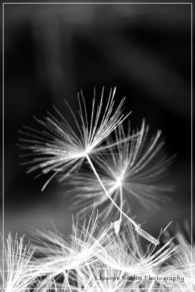 Just one wish...