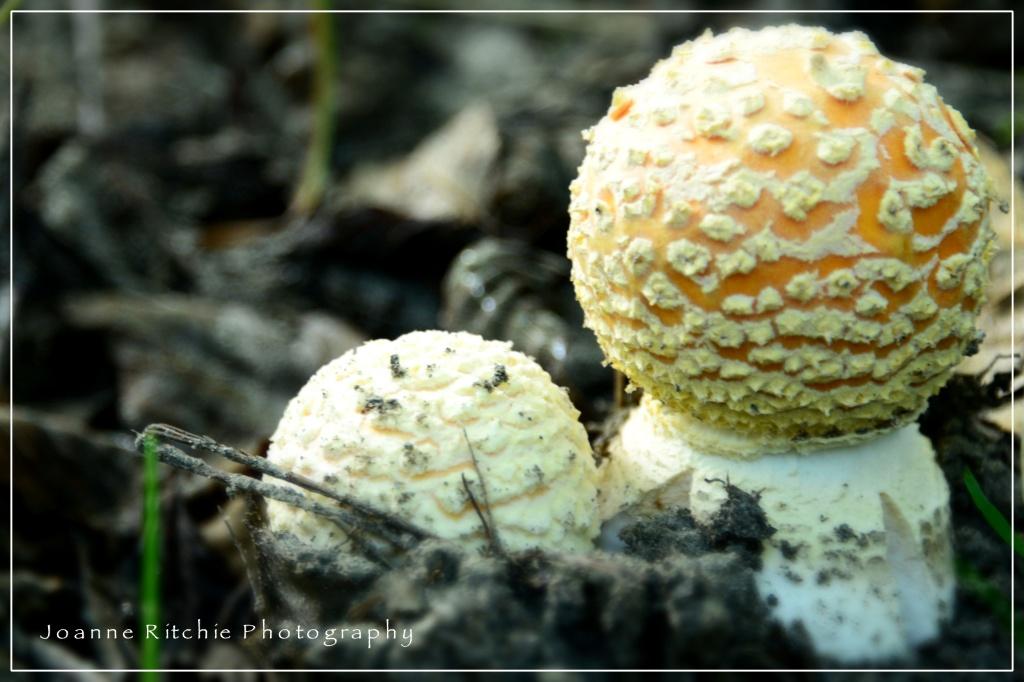 Mushroom Mounds