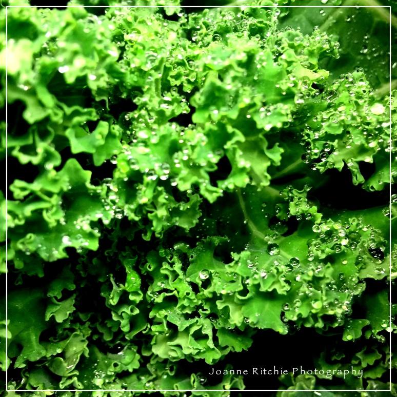 (Extra) ordinary Kale!