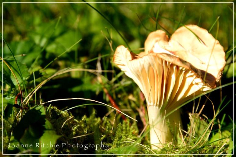 Marilyn Mushroom