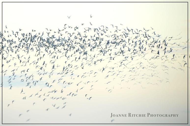 Camaraderie of Birdds