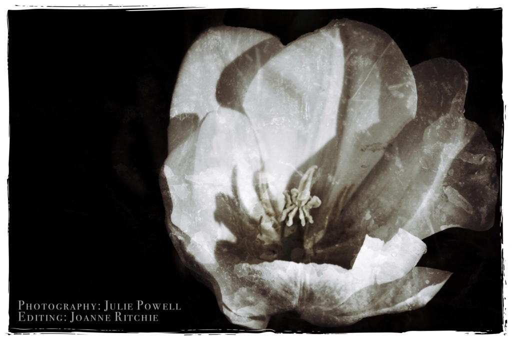 One Photo Focus December - Julie Powell - Joanne Ritchie