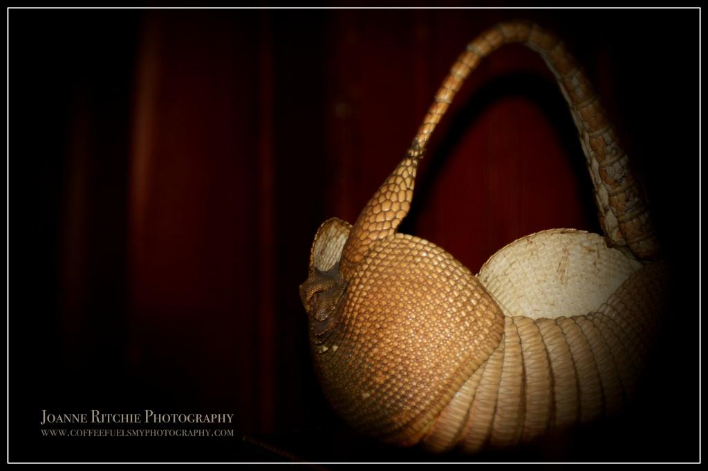 Armadillo Bag