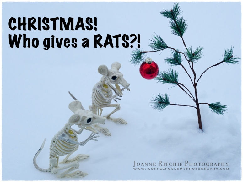 Who gives a RATS?!