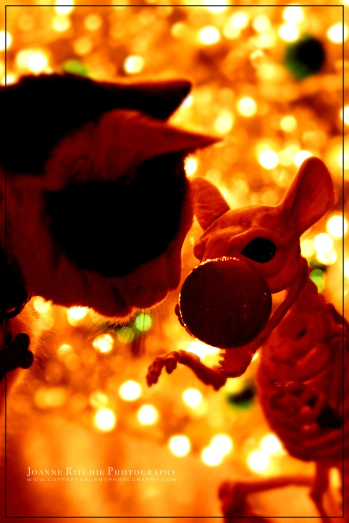 Rudolph Rat