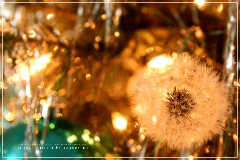 Tinsel Wishes