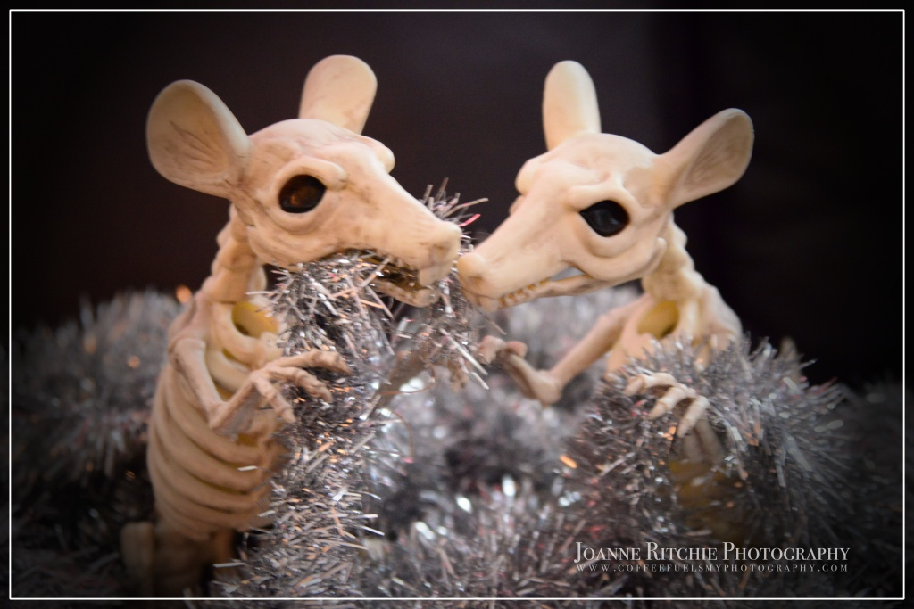 Christmas has gone to the RATS!