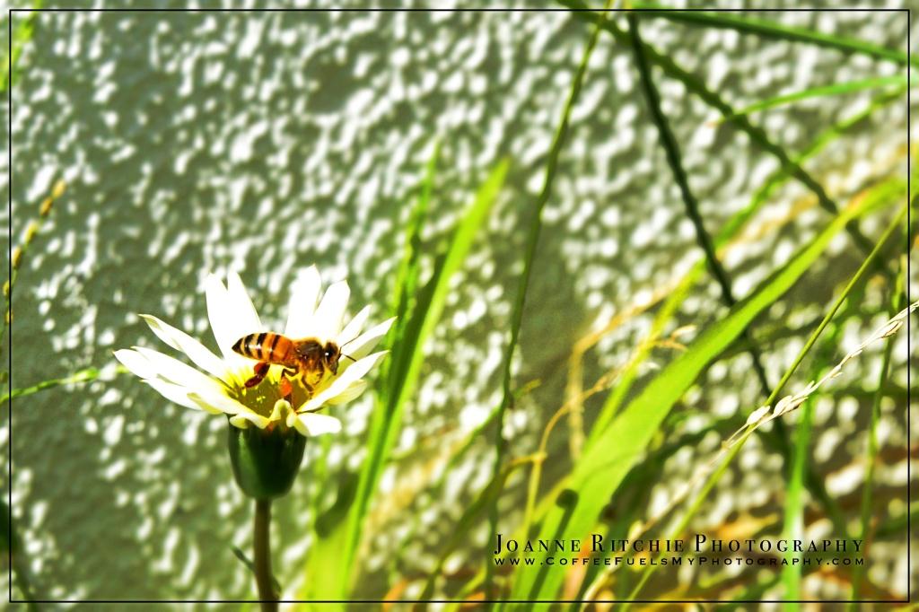 Bee Autumn