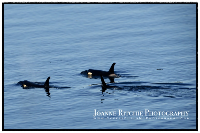 My Orcas