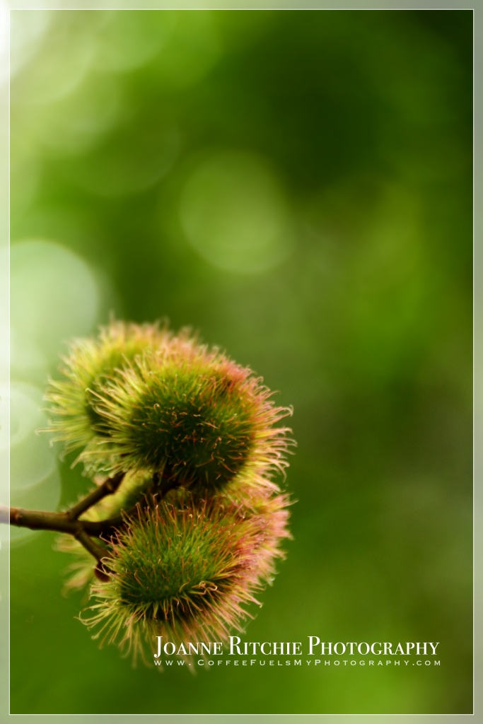 Fur Balls - Week 1