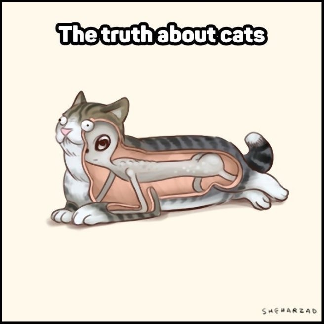 The Truth about Cats!