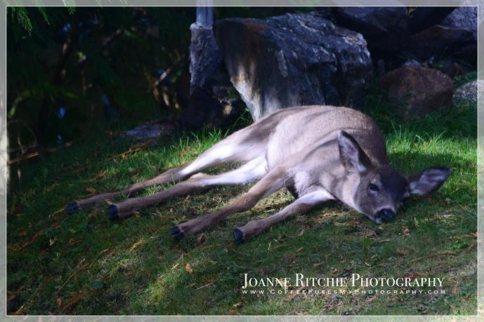 deer-glow