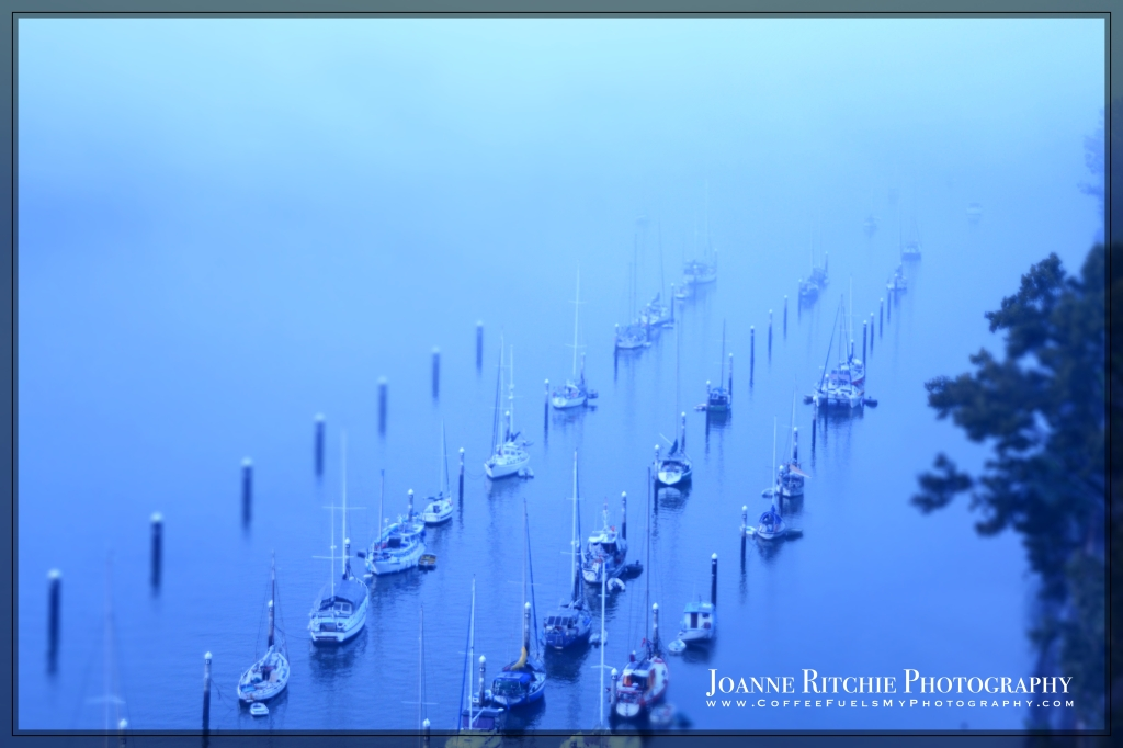 yachts-in-the-morning-mist