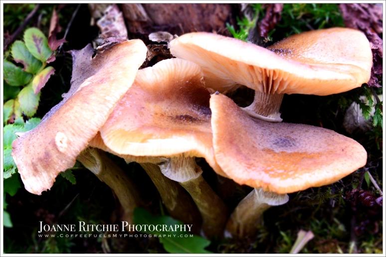 fingers-of-fungi