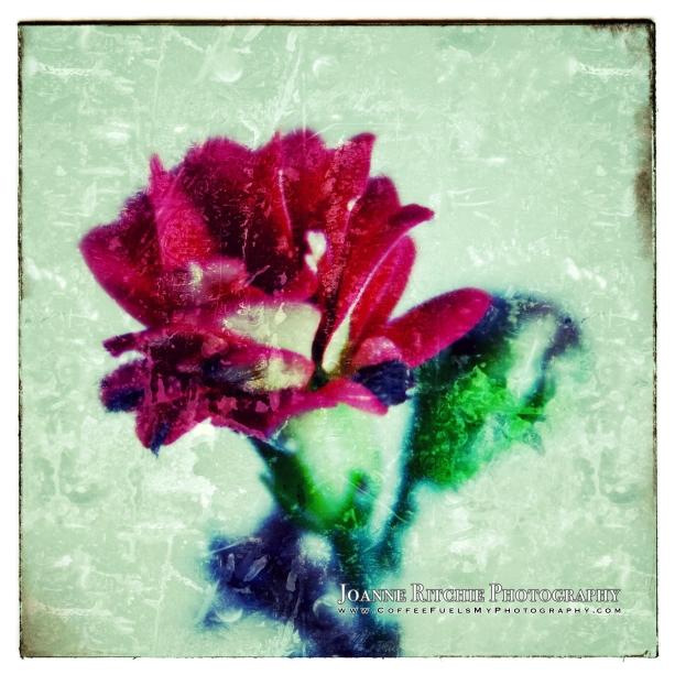 One Last Bloom