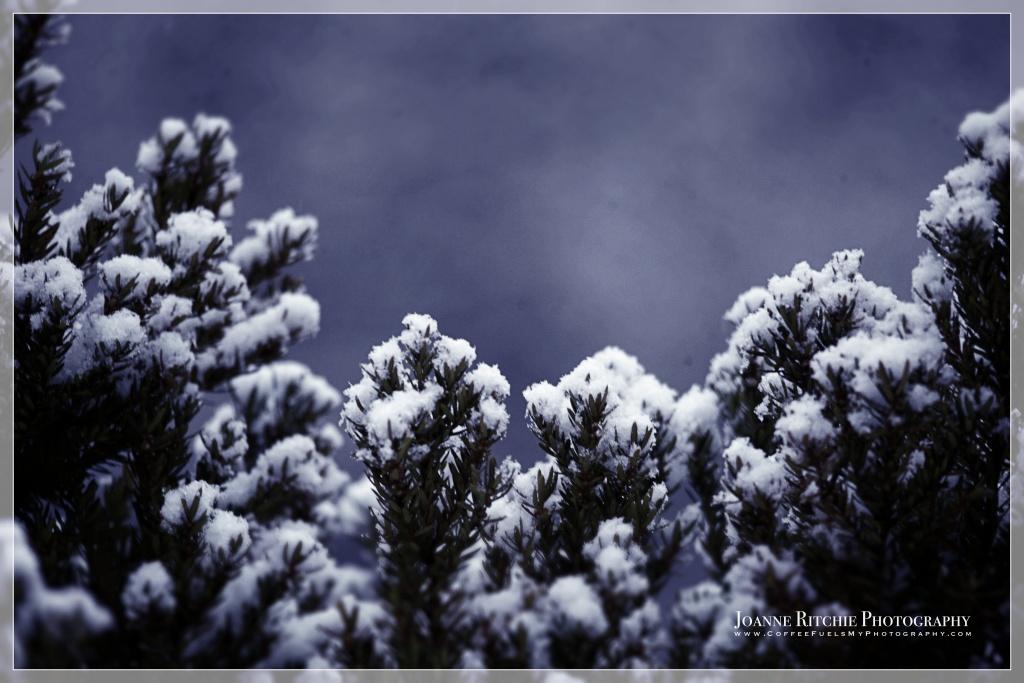 light-dusting-of-snow